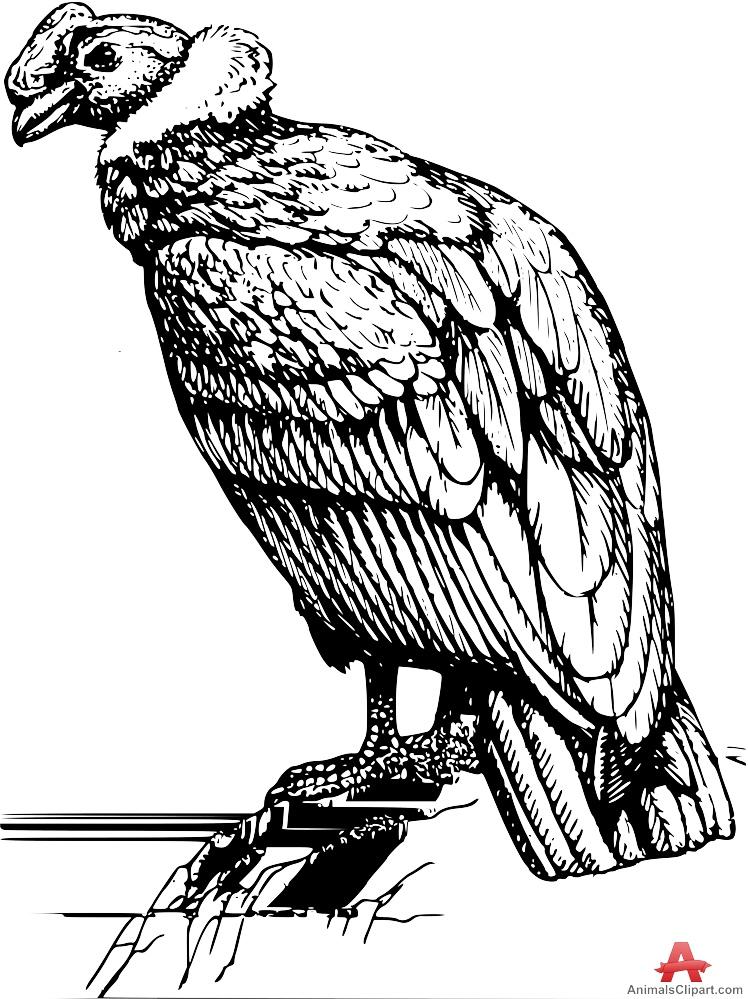 Condor Bird Clipart.