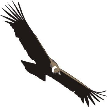 Condor clipart - Clipground