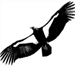 Free Condor Clipart.