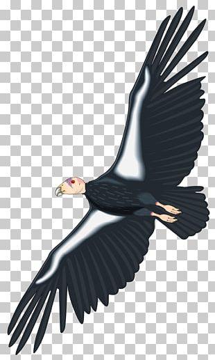 California Condor PNG Images, California Condor Clipart Free Download.