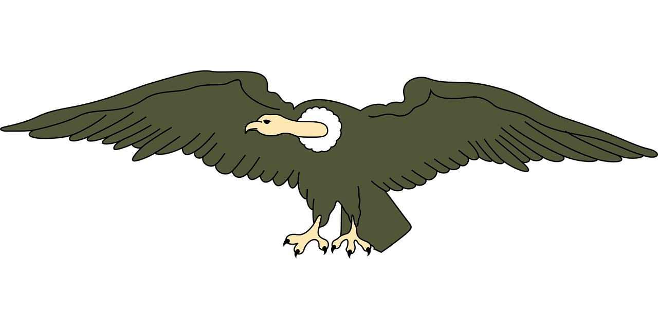 Andean Animal Bird Condor PNG.
