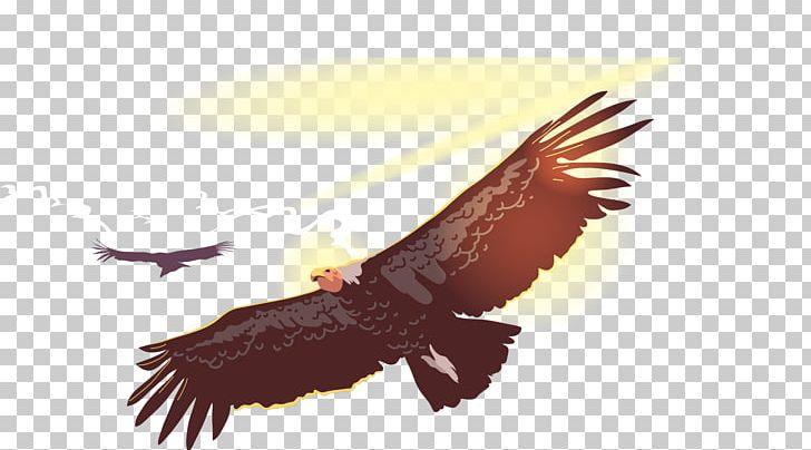 Bird Flight Owl Condor PNG, Clipart, Accipitriformes, Andean Condor.
