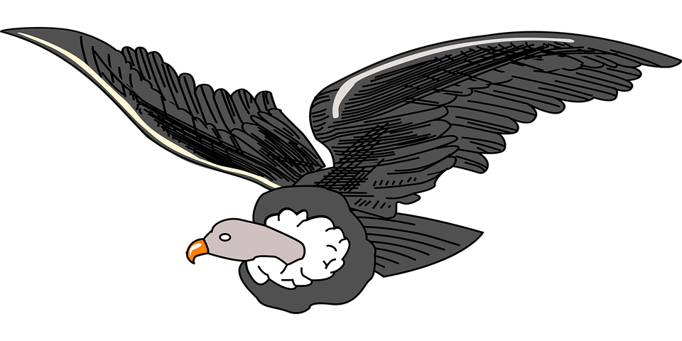 Andean Animal Bird.