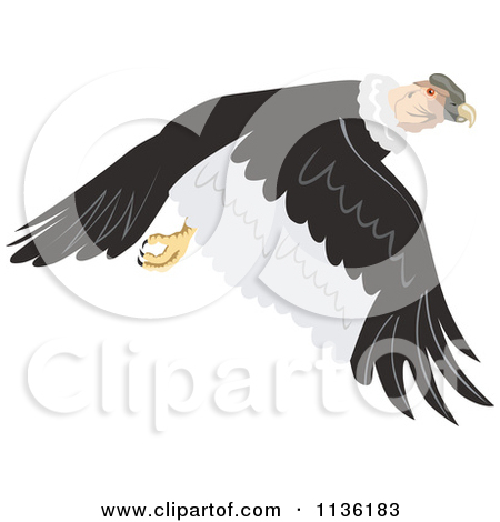 Clipart Of A Flying Condor Vulture.
