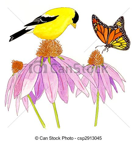 Stock Illustrations of American Goldfinch.