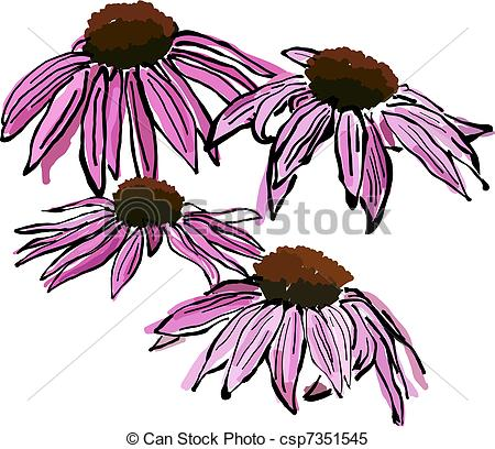 Clipart Vector of Sketchy Echinacea flowers.