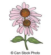 Coneflower Vector Clipart EPS Images. 24 Coneflower clip art.