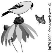 Coneflower Illustrations and Stock Art. 24 coneflower illustration.