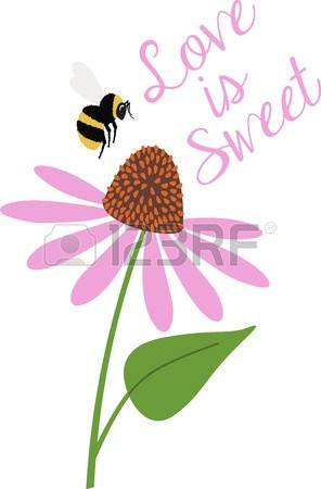 109 Coneflower Stock Vector Illustration And Royalty Free.