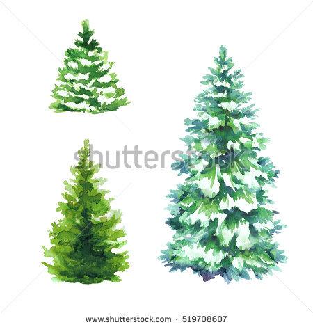 Conifers Stock Photos, Royalty.