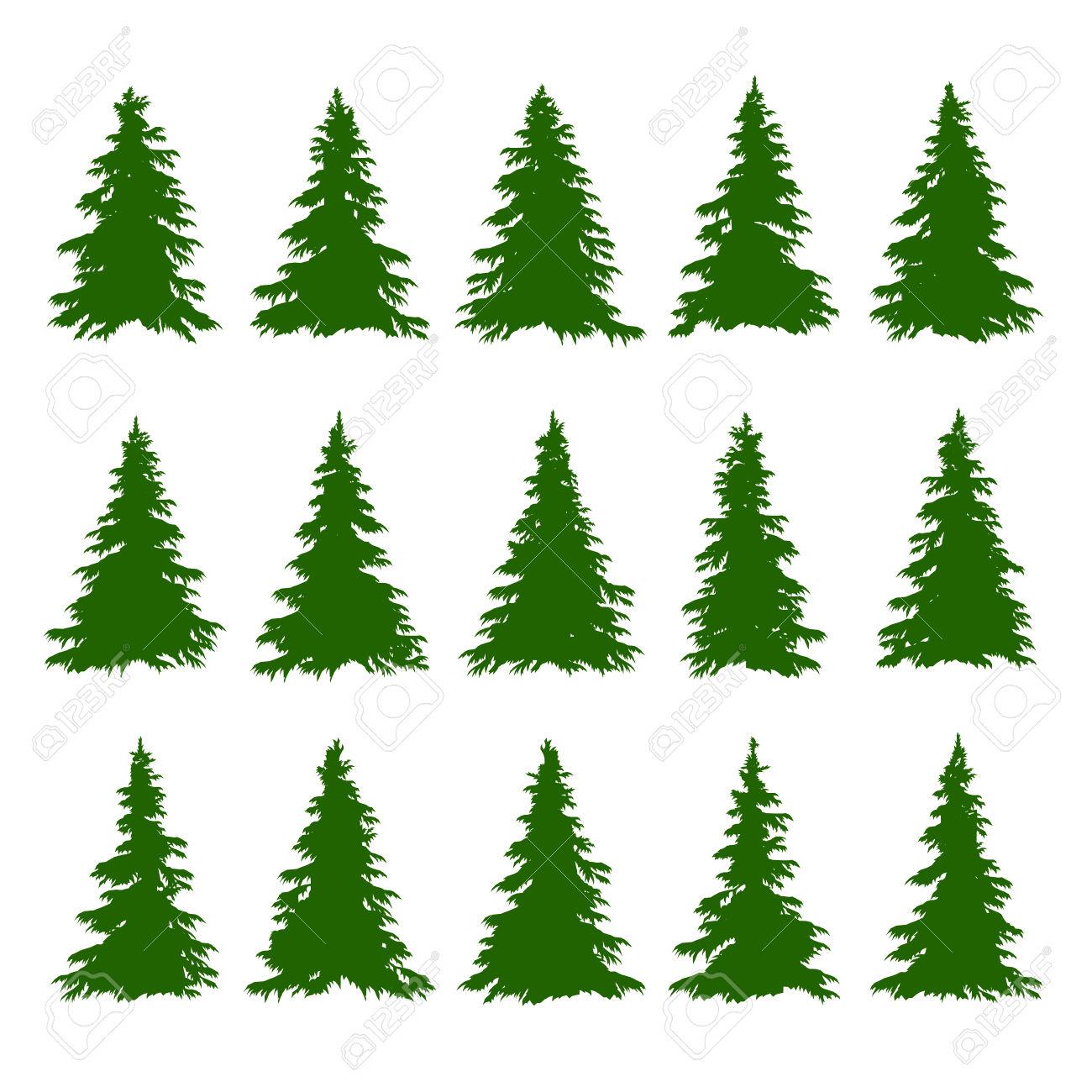 Conifer clipart.
