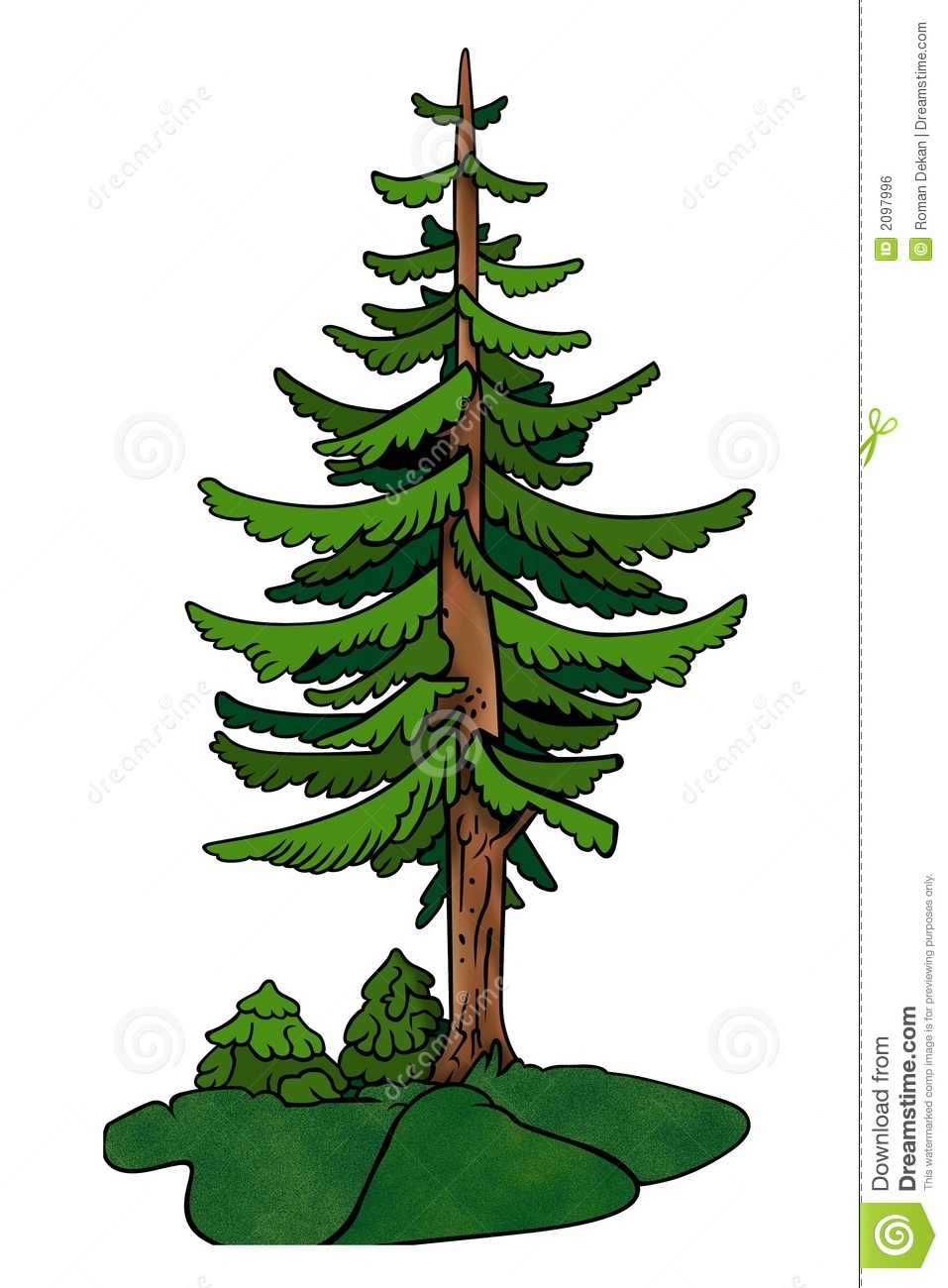 Conifer clipart.