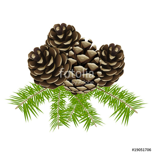 """vector conifer cone clip art"""" Stock image and royalty."""