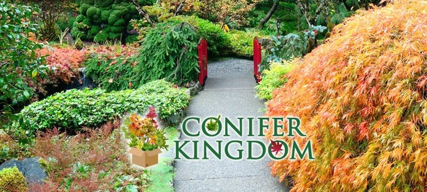 Conifer Kingdom.