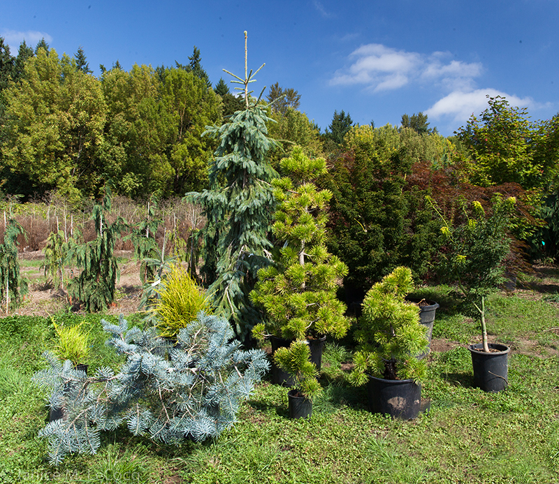 Visit to Rare Tree Nursery/Conifer Kingdom.