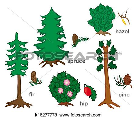 Clip Art of Conifers And Shrubs k16277778.