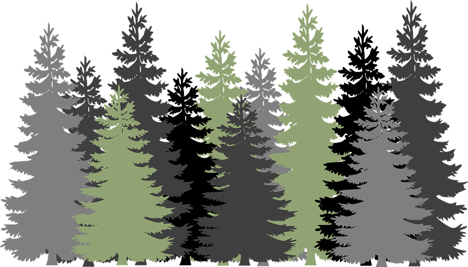 Free vector graphic: Forest, Trees, Evergreen, Conifers.
