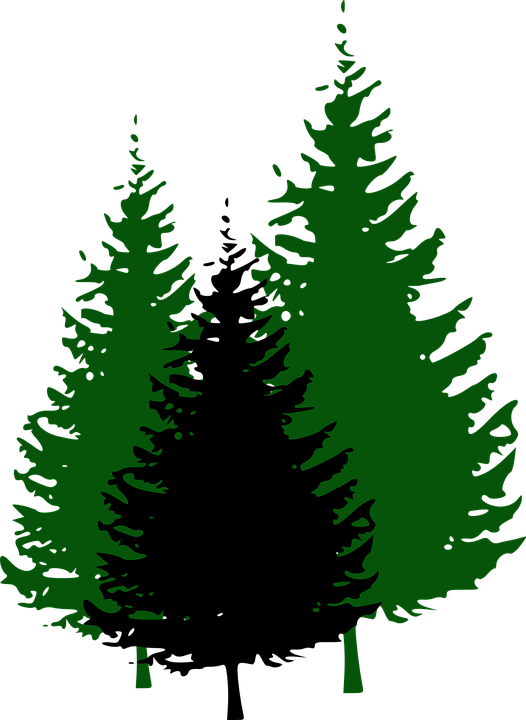 Free vector graphic: Fir Trees, Forest, Conifers, Fir.