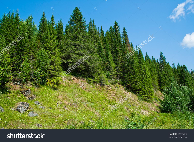 Coniferous Forest Biome Clip Art.