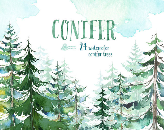 Conifer Trees. Watercolor pine spruce forest wood by OctopusArtis.