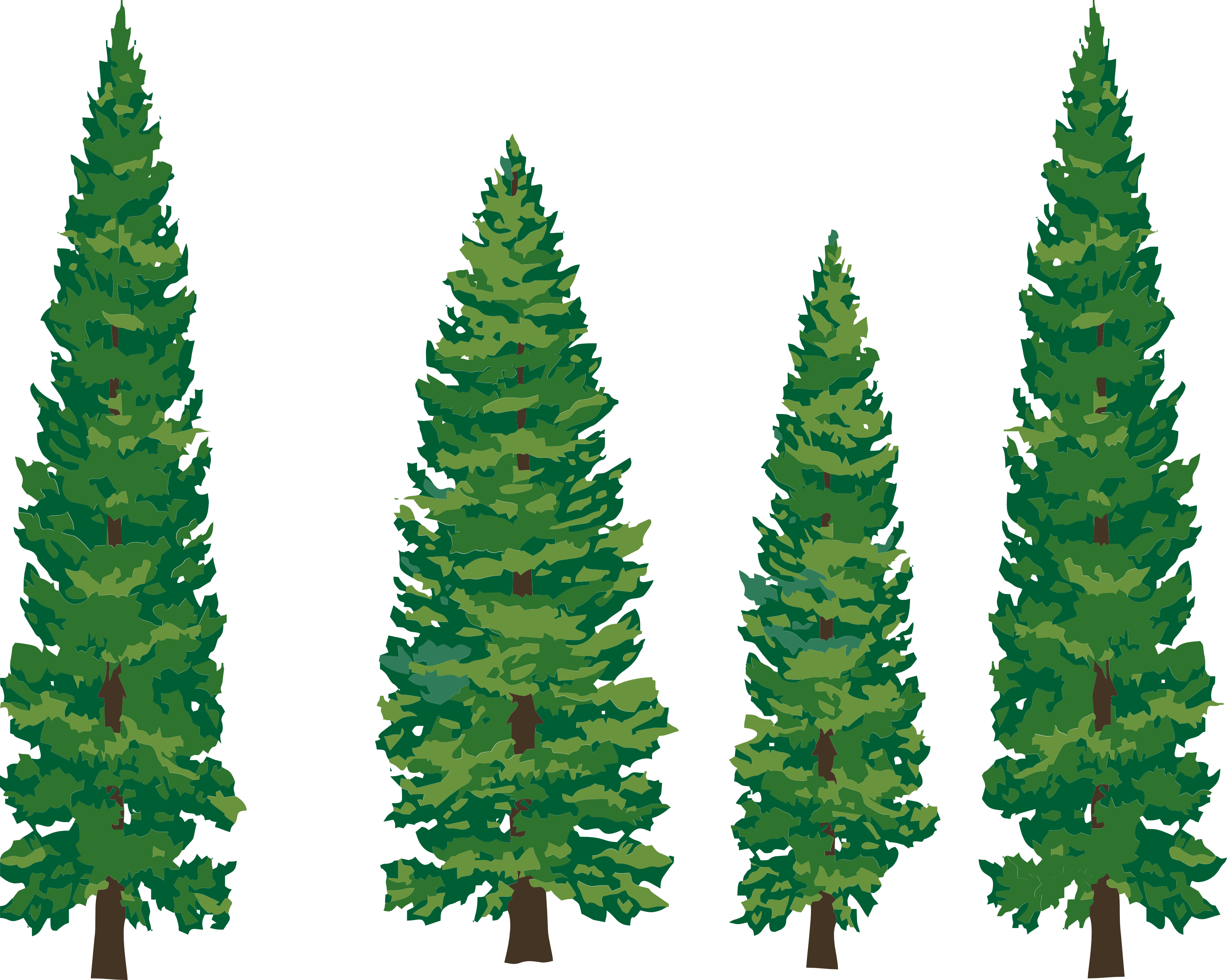 redwood forest clipart #15
