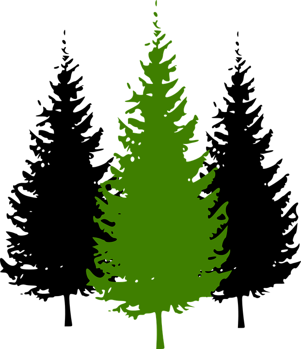 Free vector graphic: Trees, Conifer, Pine, Environment.