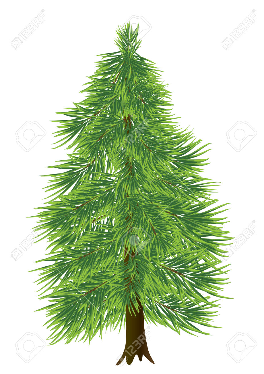 Coniferous Tree Clipart Clipground