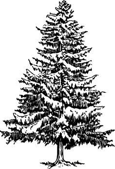Pine tree christmas tree svg on christmas trees clip art and.