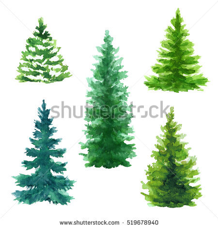 Conifers Stock Photos, Royalty.