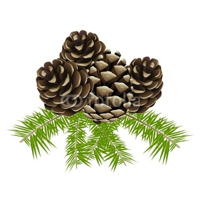 Conifers Clipart.