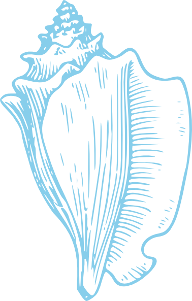 Sky Blue Conch Shell Clip Art at Clker.com.