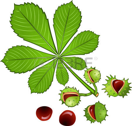 59 Conker Stock Vector Illustration And Royalty Free Conker Clipart.