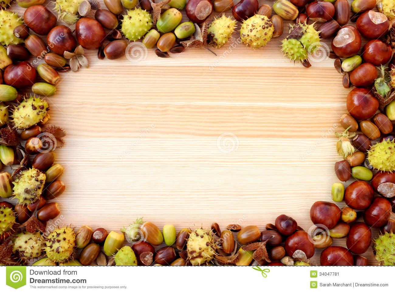 Horse Chestnut (conker) Border Stock Images.