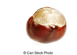 Conker Stock Photos and Images. 1,598 Conker pictures and royalty.