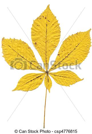 Stock Images of Fallen yellow leaf Horse.