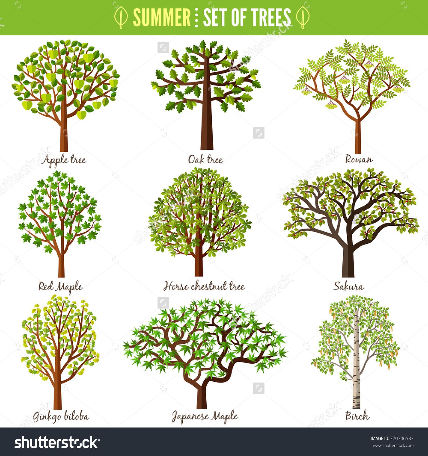 Set Summer Trees On White Background Stock Vector 370746533.