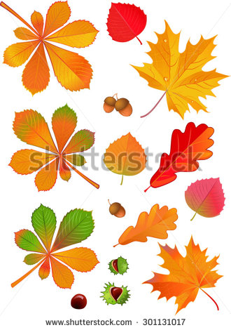 Conkers Stock Photos, Royalty.