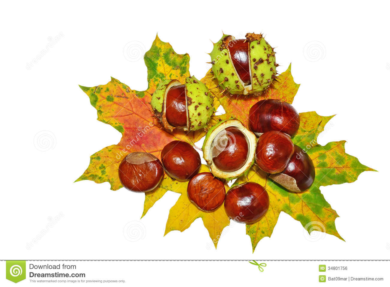 Conkers.