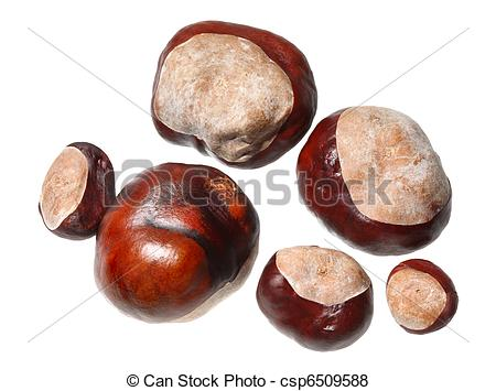 Conkers Stock Photos and Images. 1,596 Conkers pictures and.
