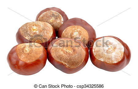 Pictures of Horse Chestnut Tree Conkers.