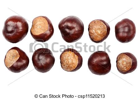 Stock Photography of Ten conkers isolated on white background.
