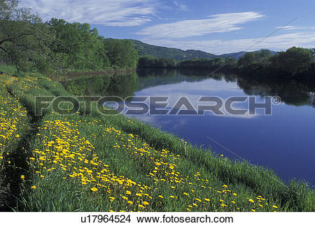 Stock Photo of river, Connecticut River, dandelions, spring.