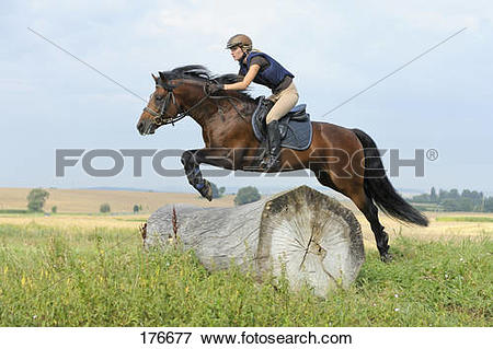 Picture of Connemara Pony. Young rider on back of a bay stallion.