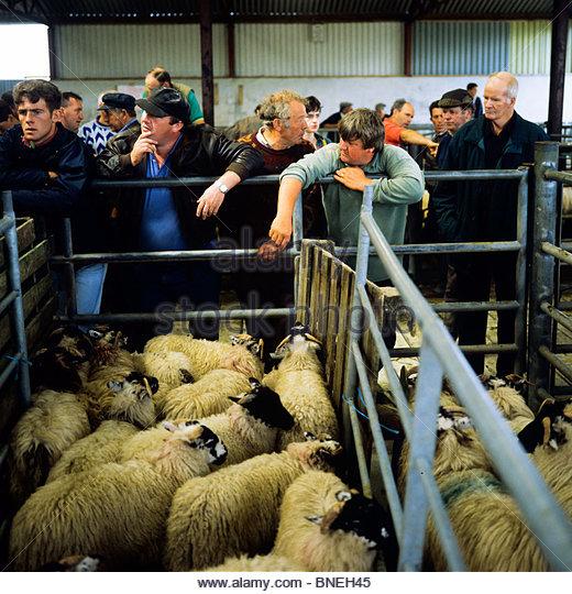 Farmers Cattle Market Commerce Stock Photos & Farmers Cattle.