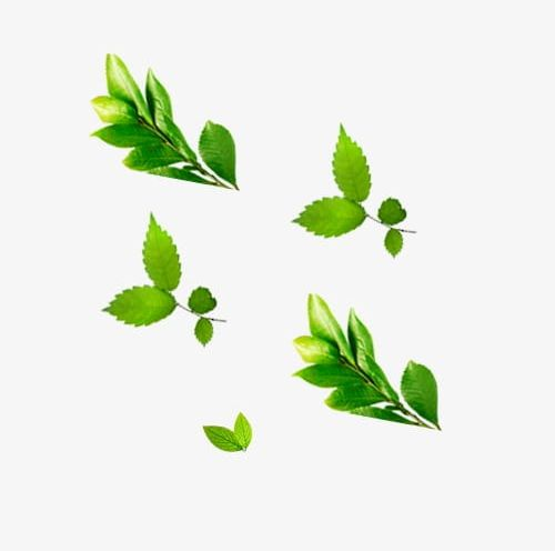 Mint Floating Grass PNG, Clipart, Consecutive, Floating.