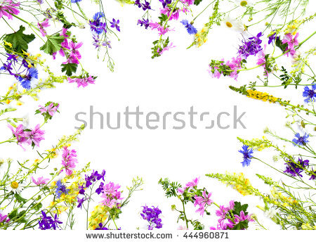 Larkspur Isolated Stock Photos, Royalty.