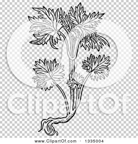 Clipart of a Black and White Woodcut Herbal Consolida Larkspur.