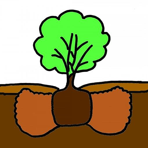 How To Plant Container Grown Trees and Shrubs.
