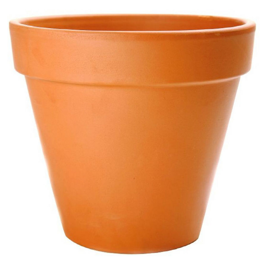 BULBS 101: Planting in Containers.