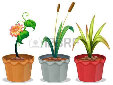 Container Plants Stock Photos Images, Royalty Free Container.